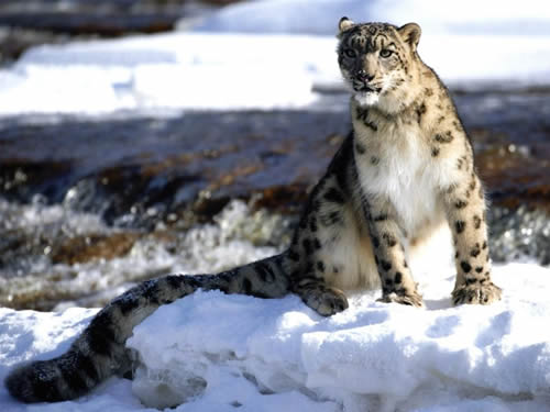 snow leopard mac os x wallpaper. Snow Leopard Photo 2