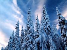 Christmas winter wallpaper