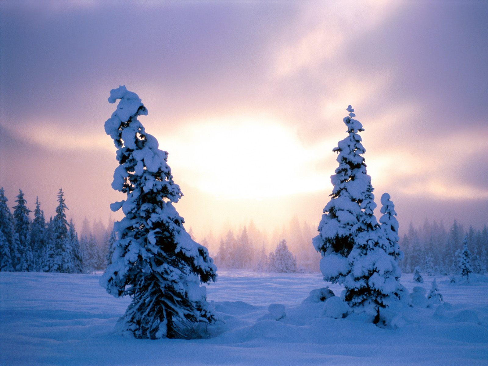 Beautiful christmas pictures and graphics free to enter for Immagini inverno desktop