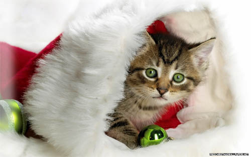 Wallpaper-christmas-kitty in Beautiful Christmas Pictures and Creative Christmas Designs