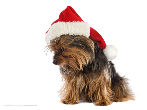 Wallpaper-dog-santa-hat in Beautiful Christmas Pictures and Creative Christmas Designs