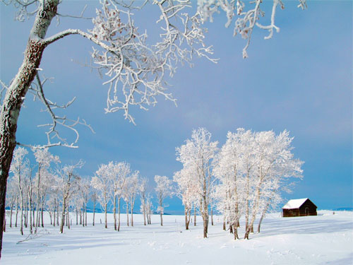 Wallpaper-landscape-winter-snow-trees-3 in Beautiful Christmas Pictures and Creative Christmas Designs