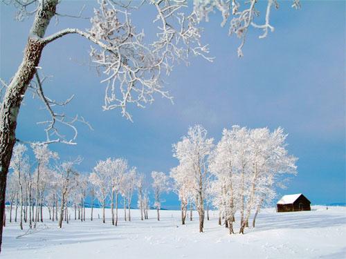Sfondi Invernali Natalizi.60 Piu Belle Immagini Di Natale E Creativi Disegni Di Natale Leawo
