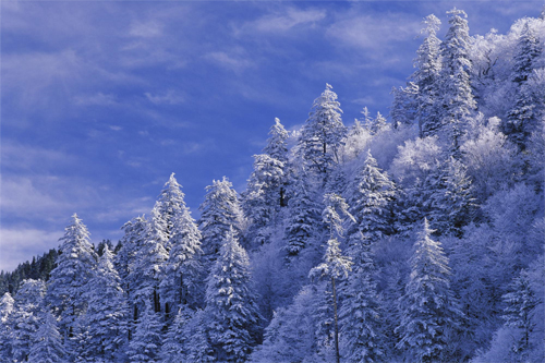 Wallpaper-winter-landscape-great-smokey-mountains-2 in Beautiful Christmas Pictures and Creative Christmas Designs