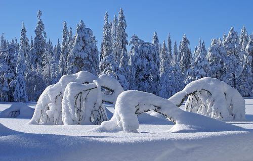 Wallpaper-winter-landscape-krokskogen-norway in Beautiful Christmas Pictures and Creative Christmas Designs