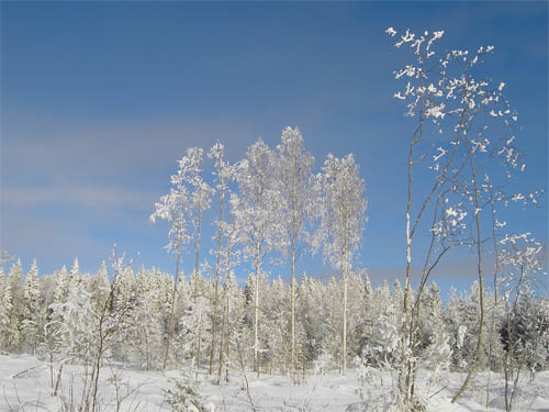 Wallpaper-winter-landscape-tervo-finland in Beautiful Christmas Pictures and Creative Christmas Designs