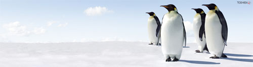 Wallpaper-winter-penguins-triple-monitor in Beautiful Christmas Pictures and Creative Christmas Designs