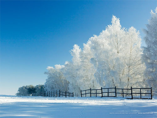 Wallpaper-winter-wonderland-blue-white in Beautiful Christmas Pictures and Creative Christmas Designs