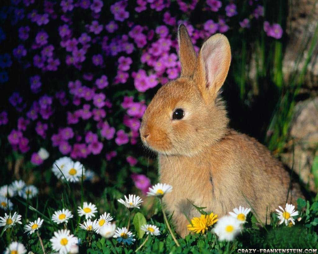 Brown Rabbit with Pink and White Flowers Wallpaper