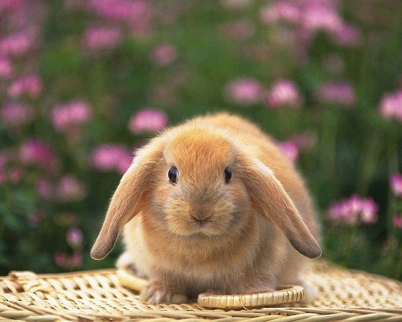 Brown Easter Rabbit
