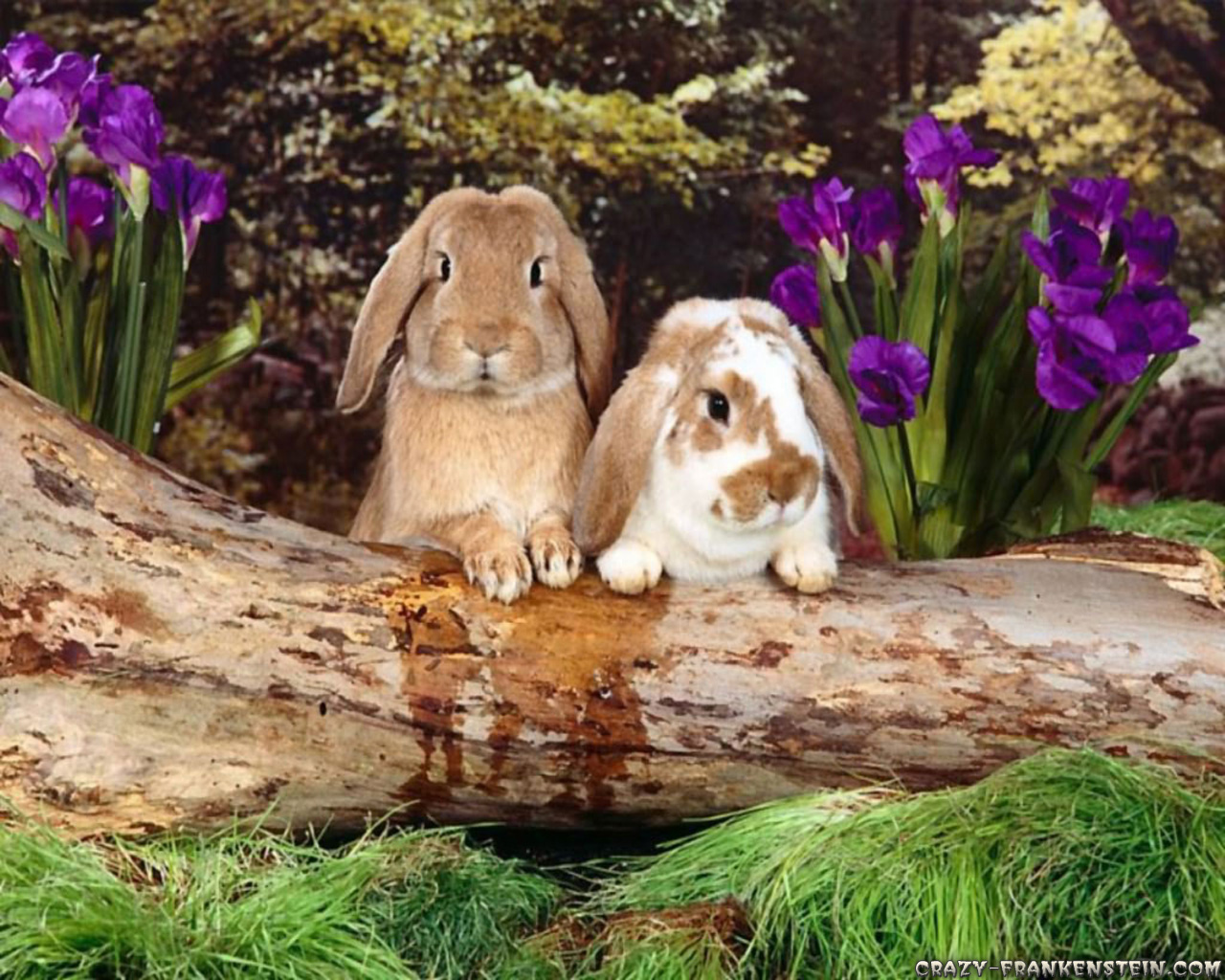 Happy Easter Rabbit at Forest wallpaper