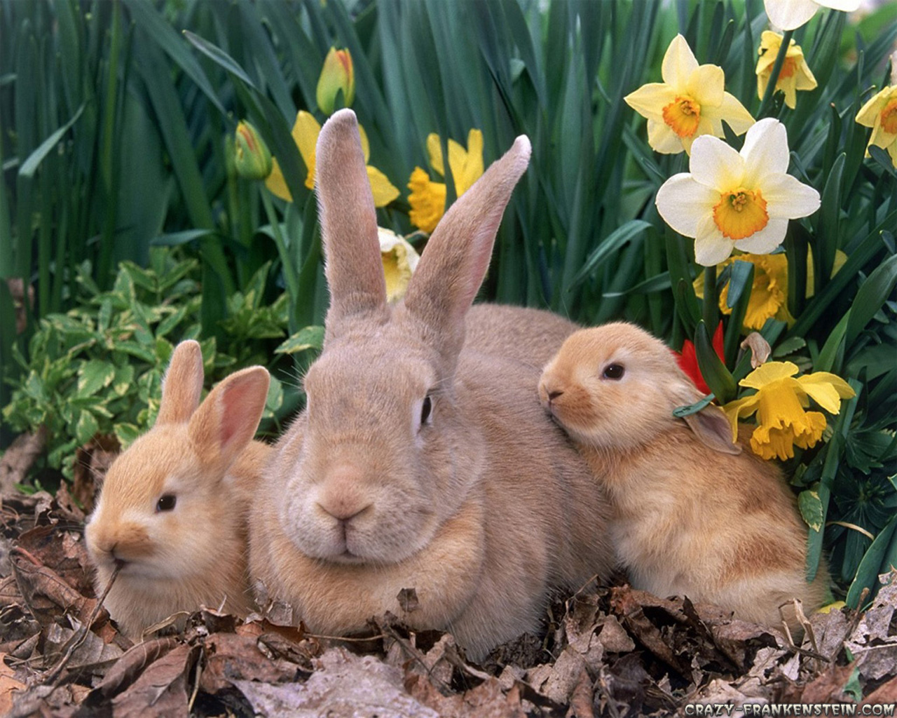 Happy Three Easter Rabbits wallpaper