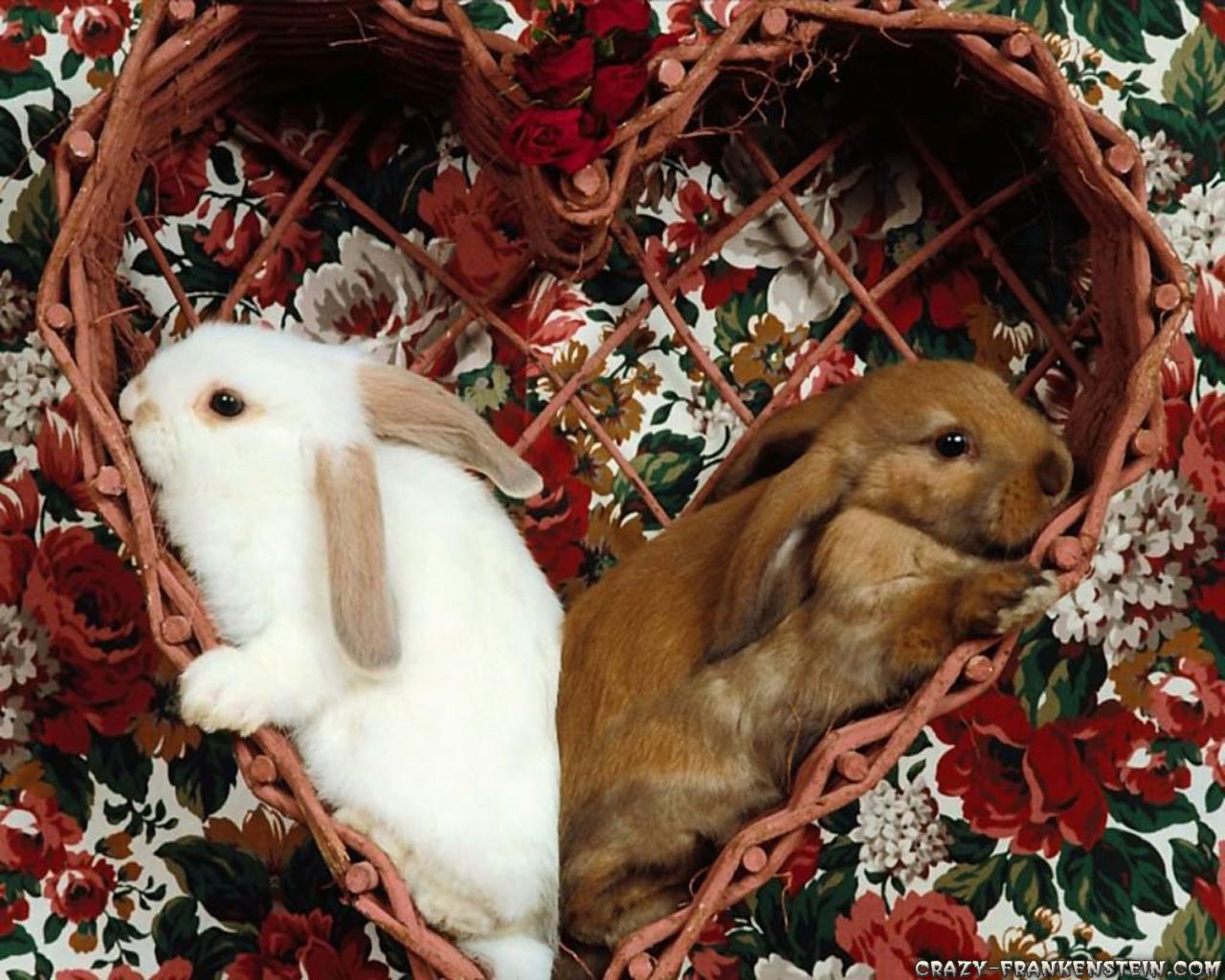 Happy Two Rabbit wallpaper