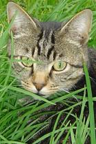 cat-in-grass