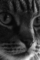 dark-cat