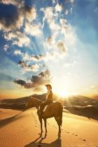 desert-horse