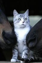 dog-cat-amicizia