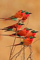 rosso-bird