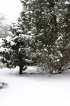 tree-in-snow
