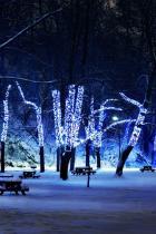 albero-luci