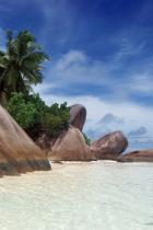 tropicali-rocks