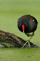 acqua-uccello