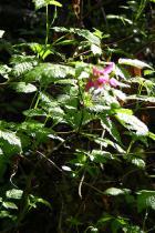 wild-flor