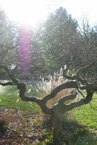 inverno-albero